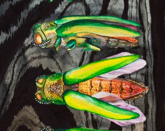 Emerald Ash Borer: Agrilus planipennis, Watercolor Giclee Art Print, Natural History Illustration, Entomology, Bug Portrait, Wall Decor