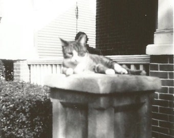 "Vintage Snapshot ""Pretty Kitty"" Tabby Cat Found Vernacular Black & White Photo"
