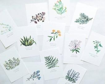 North American Plant 4x6 Postcard Pack (12 plants)