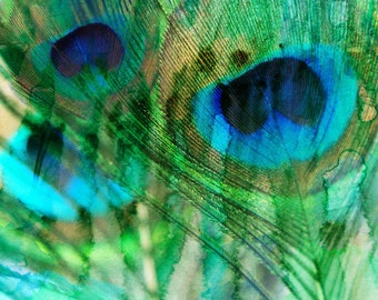 "Peacock feather II . Canvas Print by Irena Orlov 30"" x 30"""