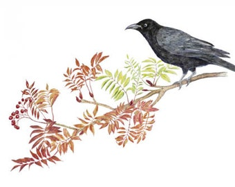 LIMITED EDITION of a Celtic Carrion Crow Resting on Rowan or Mountain Ash, Certificate of Authenticity, Bird Art, Celtic Art, Celtic Bird
