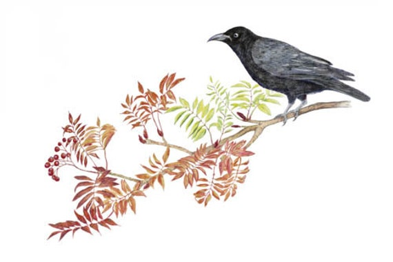LIMITED EDITION of a Celtic Carrion Crow Resting on Rowan or Mountain Ash, Certificate of Authenticity, Bird Art, Celtic Symbol, Art Print
