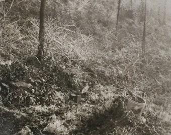 Original Antique Photograph Into the Woods