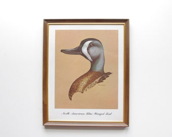 North American Blue Winged Teal - Framed Wildlife Duck Print - Wall Hanging