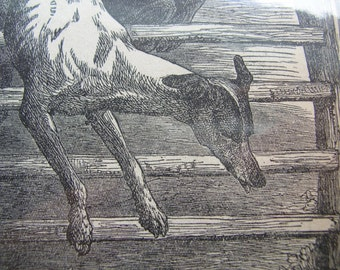 Antique Hunting Dog Illustration - Antique  Print - Black and White Print - Antique Ephemera - Vintage Ephemera