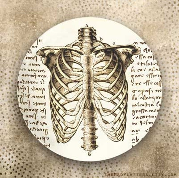 rib cage - Da Vinci melamine plate