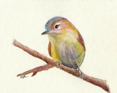 "Watercolor pencil drawing, ""Tiny Bird #1"", matted, backed, ready for framing"