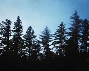 "redwood photography print / black blue large wall art / minimal nature woods forest California landscape photo print / ""seven redwoods 2"""