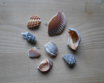 Shell fragments, craft supply, 8 pieces, jewelry supplies, surf tumbled shell fragments C17