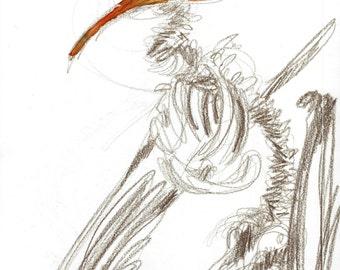 Skeleton 02- Print of my original illustration
