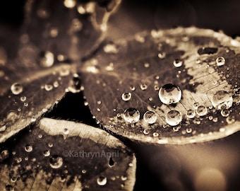 Water droplet photograph, fine art, wall decor, home decor, nature, 5x7, 8x12, 16x23.5, Metallic paper, vivid metal, metal print
