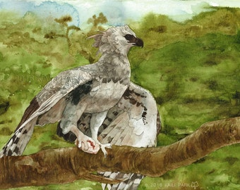 """Sky Theif - Harpy Eagle painting print - 8.5x11"""""""