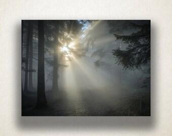 Forest Canvas Art, Sunshine Wall Art, Nature Canvas Print, Dusk Wall Art, Forest Trees, Photograph, Canvas Print, Home Art, Wall Art Canvas