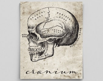 Human Anatomy Poster Anatomy Art Anatomy Print Graduation Gifts for Doctor Science Art Typographic Print Science Poster Science Cranium Head