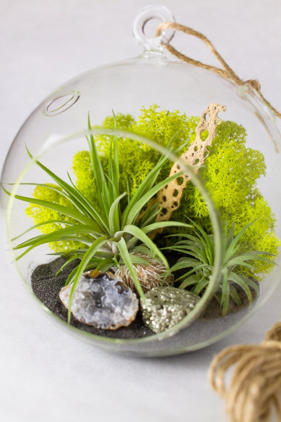 terrarium bricolage kit avec des plantes de lair geode. Black Bedroom Furniture Sets. Home Design Ideas