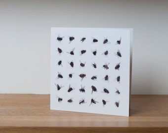 Dead flies - a greetings card with a photographic collage of dead house flies