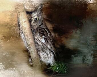 Wildlife Print Eastern screech owl, bird lover animal lover, wildlife lover bird, owl art,nature, closeup, portrait, fine art print, texture