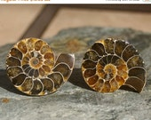 MOVING SALE.... Cabinet Knobs - Dark Caramel Ammonite  Set of 2, Stone Cabinet Knobs, Kitchen Knobs and Pulls