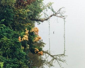 Lady Bird Lake, Austin Art, Nature Photography, Austin Texas Wall Art, Landscape Photography, Austin Texas Print, Square Art, Austin Gift