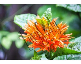 Orange Petals Photograph