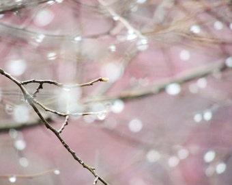 Pink Rain - Nursery Wall Art - Bare Tree - Romantic Spring Rain - Rain Drops - Dew - Pastel Decor - Abstract Art - Rainy - Nature Photograph
