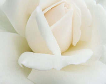 Rose Photograph - White Rose - Elegant Flower  - Flower wall Decor - Floral Art - Nature Photograph - Flower Photography