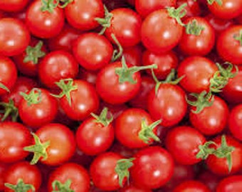 CHERRY TOMATO SEEDS 10 fresh vegetable seeds ready to plant in your hard