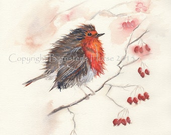 Winter Robin, fine art, Giclee Watercolour Painting Print A4. Archival quality inks