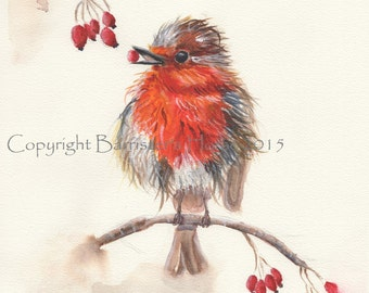 Robin Redbreast, fine art, Giclee Watercolour Painting Print A4. Archival quality inks