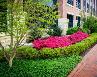 Colorful trees and bushes along a sidewalk in downtown Richmond, Virginia. | Photo Print, Stretched Canvas, or Metal Print.
