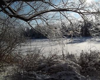 winter, winter branches, snowy branches, branches, icy pond, winter pond