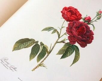 Illustrated Rose Flower book 1960s Botany Vintage book old plants