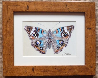 Butterfly Framed Butterfly Painting Butterfly Picture Butterfly Art Butterfly Illustration - The Common Buckeye, a truly beautiful butterfly