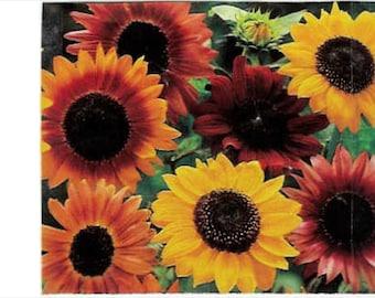 100 Sunflower Autumn Beauty Mix * 100 Seeds