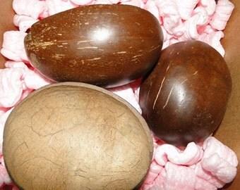 Polished Coconut Half, Natural Coconut Shells, Coconut Cups, Real Coconut, Bulk Coconut Cups, Wholesale Coconut Shells, Coconut Cups, Coco