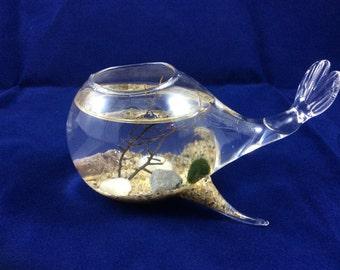 Marimo Whale Aquarium / Marimo Aquarium / Marimo Terrarium / Marimo Kit / Marimo Pet Kit / Marimo Moss Ball / Marimo Ball / Moss Ball