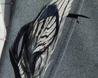 Zebra Pheasant Feather boutonniere