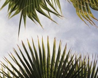 Tropical Palm Trees - Fine art Photography Print, Travel Photography, Leaf Print, Flora, Trees, Botanical, Blue Sky, Clouds, Film Photograph