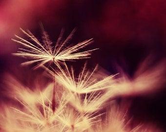 Dandelion photography, dandelion art, pink dandelion print, flower photo, moody, macro photography, fine art print, home decor, wall decor