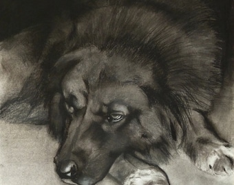 Dog Days (Original charcoal drawing)