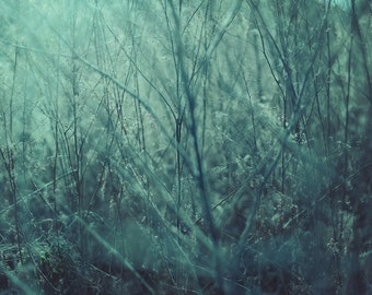 Grass, original fine art photography, print, hungary, makó, plant, blue, nature, green, garden, home, monochrome