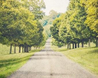 Green Landscape Photography, Tree Art, Fine Art Photography, Nashville Tennessee, TN Rustic Nature Tree Print, Landscape Print, Road Photo