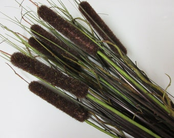 LARGE Artificial Cattails