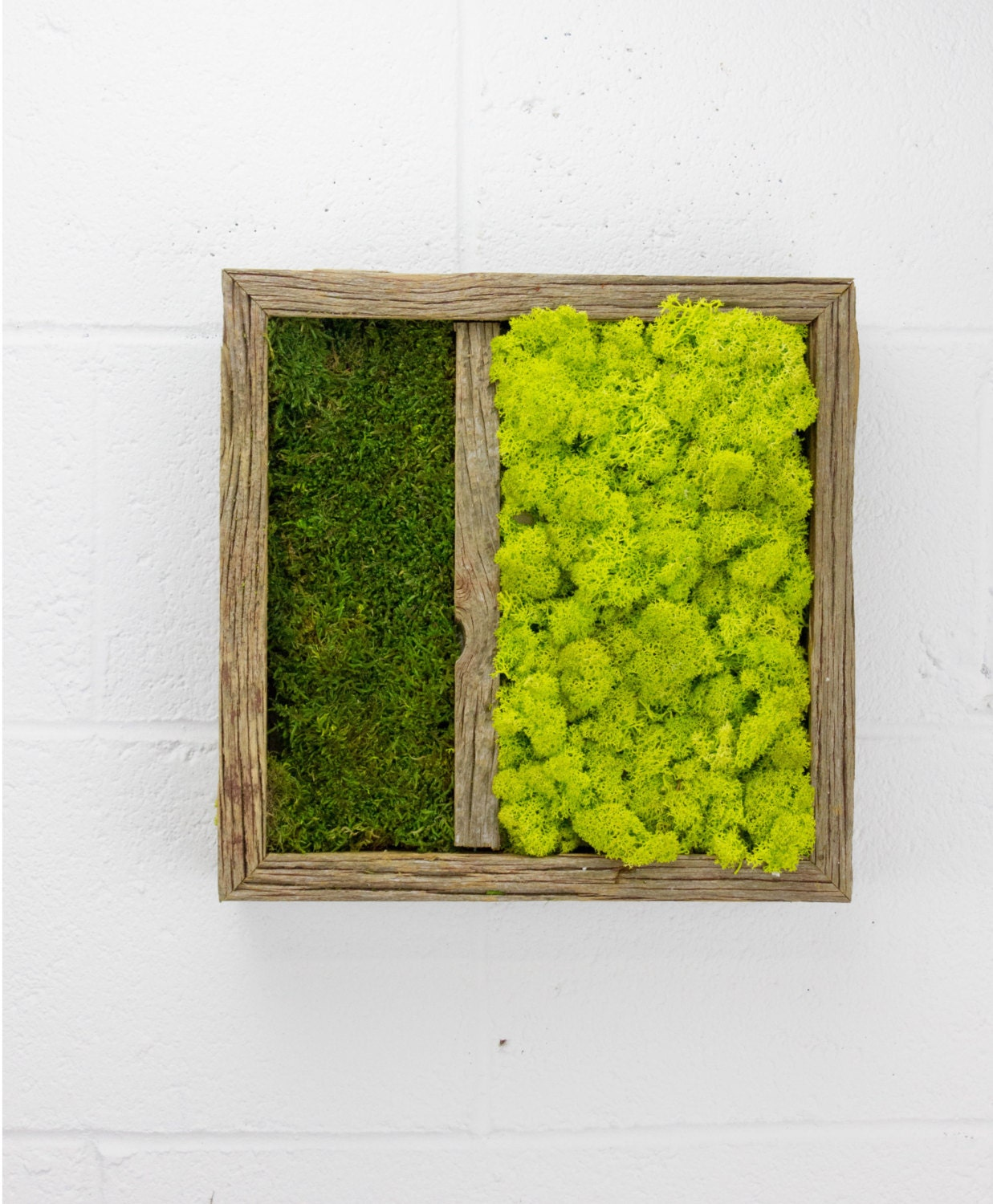 Twinz water free green wall art moss and preserved plants for Green wall art