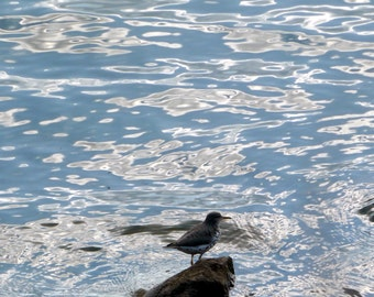 bythesky: sandpiper at the water's edge