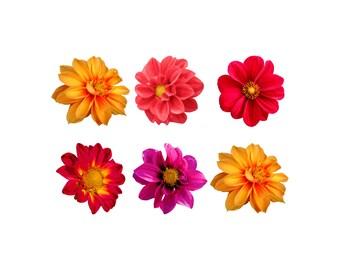Flower Clip Art FLORAL CLIP ART 50 Png Flowers Spring