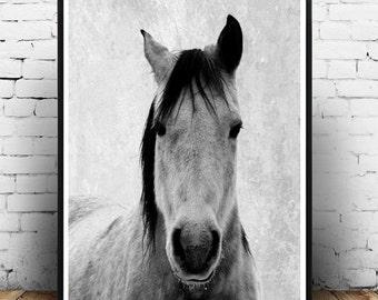 Horse Photo, Printable Art, Horse Art Print, Horse Print, Black And White Horse, Textured, Wall Decor, Wall Art, digital Download