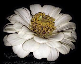 Flower of Babel