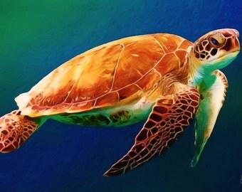 South Sea Turtle