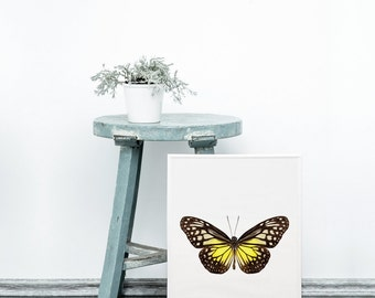 Real butterfly art print - yellow butterfly print - Modern wall art - Digital butterfly art - Scandinavian modern design - Scandinavian art